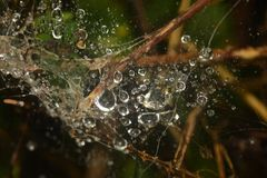 Goccioline di acqua sulla ragnatela Fotografia Stock Libera da Diritti