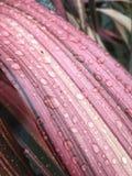 Goccioline di acqua sulla superficie di una foglia Fotografie Stock
