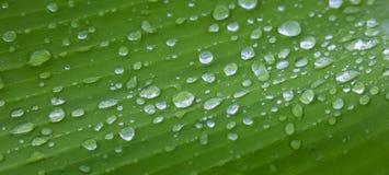 Goccioline scintillanti dell'acqua piovana sulla foglia verde Fotografia Stock