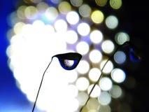 Goccioline su muschio fotografia stock