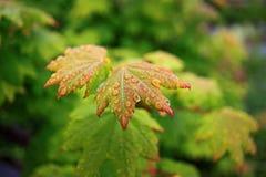 Goccioline su vegetazione verde fotografia stock