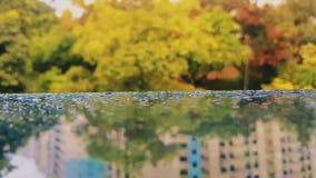 Goccioline sul pannello Fotografie Stock