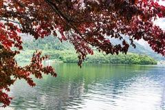 Goccioline sulle foglie rosse fotografia stock