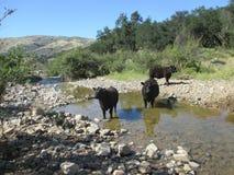 Goce de The Creek Imagen de archivo libre de regalías