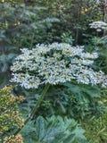 Goce de la naturaleza y de sus numerosas plantas asombrosas foto de archivo