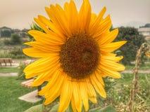 Goce de las flores hermosas en el parque fotos de archivo