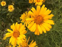 Goce de las flores hermosas en el parque fotografía de archivo