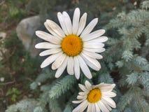 Goce de las muchas flores hermosas del verano foto de archivo