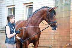 Goce del caballo de la castaña del enfriamiento abajo en la ducha del verano Fotografía de archivo libre de regalías