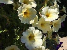 Goce del mucho floral y flora en el verano fotografía de archivo libre de regalías