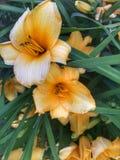 Goce del verano y de sus flores amarillas hermosas fotografía de archivo libre de regalías