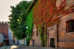 Gocki budynek przerastający z bluszczem, stary miasteczko w Toruńskim, Polska obraz royalty free