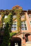 Gocki budynek przerastający z bluszczem, stary miasteczko w Toruńskim, Polska zdjęcia royalty free