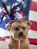 God Bless America Yorkie Dog for September 11. Yorkie wearing Patriotic Hat in memory of September 11th royalty free stock photo