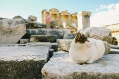 God cat in a ruin royalty free stock photography