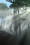 God Rays 3. The morning mist and the sun light generate a mystic atmosphere in the mountain woods Royalty Free Stock Photography