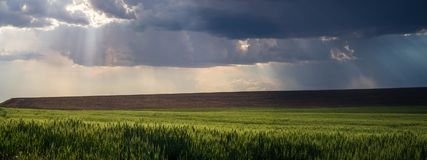 Panorama 2: god rays over The Palouse royalty free stock images
