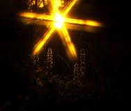God's grace. The sun illuminates plants Royalty Free Stock Photography