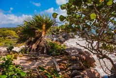 God of Winds Temple on turquoise Caribbean sea. Ancient Mayan ruins in Tulum, Mexico, Yucatan.  stock image