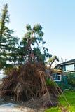 God zij dank voor Huisverzekering toe te schrijven aan boommoordenaar Royalty-vrije Stock Afbeeldingen