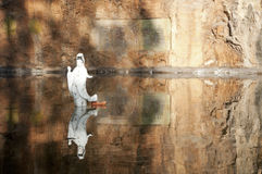 Goddess Guanyin Statue with reflection. One white china Goddess Guanyin Statue standing in a pond with perfect reflection image Stock Photo