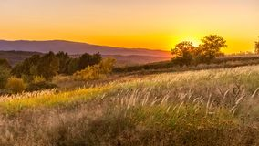 Goden summer sunset nature trees royalty free stock images
