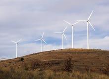 Godere del vento Fotografia Stock