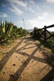 Godere dell'escursione sulla via stupefacente sul bordo della linea costiera atlantica con le piante tropicali Immagine Stock