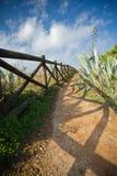Godere della camminata sul passaggio pedonale variopinto sul bordo della costa atlantica con le piante tropicali Fotografia Stock Libera da Diritti