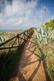 Godere della camminata sulla via bella sul bordo della linea costiera atlantica con le piante tropicali Immagine Stock