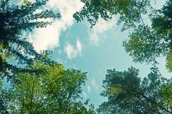 Godere della vista della foresta Camminando nella foresta immagine stock