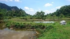 Godere di un paesaggio verde piacevole immagine stock libera da diritti