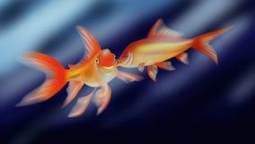 Goldfishes love kiss Royalty Free Stock Photo