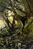 Gods av trädet Arkivbilder