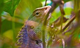 Godzilla. Chameleon green camouflage stock photography