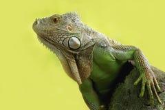 Godzilla Stock Image