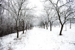godziny krajobrazu sezonu zimę Obrazy Stock