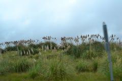 Goed aangestoken beeld natuurlijke panoramische willekeurig Royalty-vrije Stock Afbeeldingen