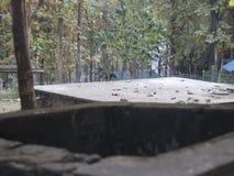 Goed op bosgebied met schoonheidsaard stock fotografie