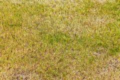Goed verzorgd gazon voor golf, voetbal en andere openluchtsporten stock fotografie