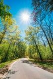 Goede Asphalt Forest Road In Sunny Summer-Dag steeg stock foto's