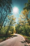 Goede Asphalt Forest Road In Sunny Summer-Dag Steeg die de Lente Vergankelijk Bos doorneemt royalty-vrije stock afbeeldingen
