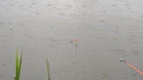Goede beet bij de visserij van lichte regen, karper grote vangst stock videobeelden