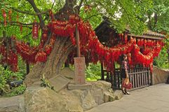 Goede gelukboom stock fotografie