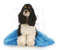 Goede hond royalty-vrije stock foto's