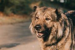Goede hond in openlucht Royalty-vrije Stock Foto's