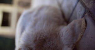 Goede hondspelen met de eigenaar stock video