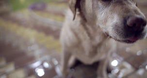 Goede hondspelen met de eigenaar stock videobeelden