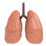 Goede longen Stock Foto