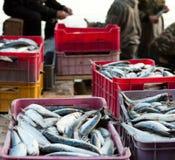 Goede vangst van vissen Stock Afbeelding
